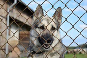 Large Dog Kennels - Post Thumbnail